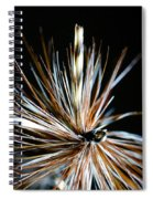 Trout Fly Spiral Notebook