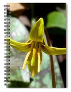 Trout Lily Spiral Notebook