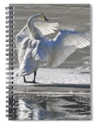 Trumpeters Wintering On The Thorne Spiral Notebook