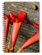 Trumpets On The Fence Spiral Notebook