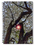 Trunk Of A Cherry Tree Blooming With White Flowers Spiral Notebook