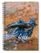 Tufted Titmouse Bath Spiral Notebook