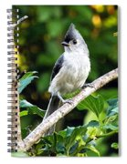 Tufted Titmouse Spiral Notebook