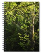 Branches Of Lovely Light Spiral Notebook