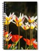 Tulip Field 11 Spiral Notebook