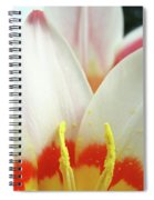 Tulip Flowers Art Prints 4 Spring White Tulip Flower Macro Floral Art Nature Spiral Notebook