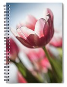 Pink Tulip Closeup Spiral Notebook
