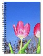 Tulip Panorama Spiral Notebook