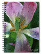Tulip Passing Beauty Spiral Notebook