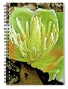 Tulip Poplar Flower - Liriodendron Tulipifera Spiral Notebook