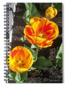 Tulip Red And Orange Spiral Notebook