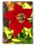 Tulip Star Spiral Notebook