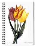Tulip (tulipa Gesneriana) Spiral Notebook