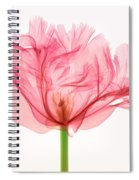 Tulip, X-ray Spiral Notebook
