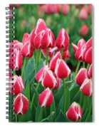Tulips - Candy Apple Delight 02 Spiral Notebook