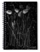 Tulips Decaying At Sunset Spiral Notebook