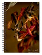 Tulip's Demise - A Natural Abstract Spiral Notebook