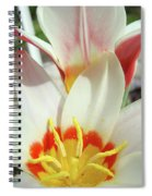 Tulips Flowers Artwork 1 Tulip Flower Art Prints Spring Floral Art White Tulips Garden Spiral Notebook