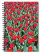 Tulips In Kristiansund, Norway Spiral Notebook