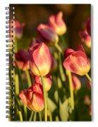 Tulips In Public Garden Spiral Notebook