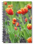 Tulips In The Springtime Spiral Notebook