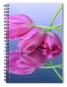 Tulips .tulipa. Spiral Notebook