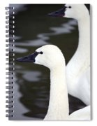 Tundra Swans Spiral Notebook
