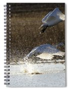 Tundra Swans Take Off 2 Spiral Notebook