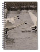 Tundra Swans Take Off Spiral Notebook