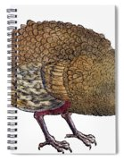 Turkey, 1560 Spiral Notebook