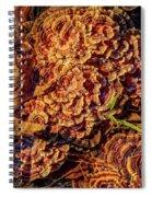 Turkey Tail Mushrooms  Spiral Notebook