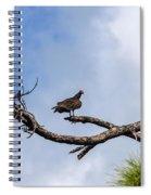 Turkey Vulture On Dead Tree Spiral Notebook