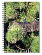 Turkey Vulture Spread Two Spiral Notebook
