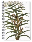 Turkish Corn, 1735 Spiral Notebook