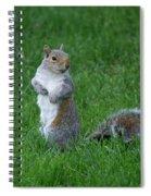 Turning Squirrel Spiral Notebook
