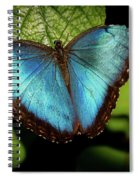 Turquoise Beauty Spiral Notebook