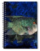 Turquoise Texas Cichlid  Spiral Notebook