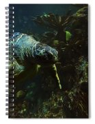 Turtle Crawl Spiral Notebook