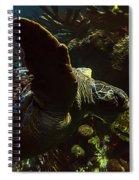 Turtle Wave Spiral Notebook