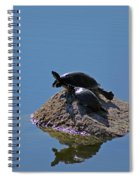 Turtles Tanning Spiral Notebook