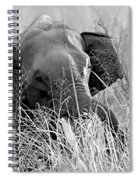 Tusker In The Grass Spiral Notebook