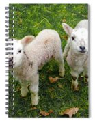 Twins - Spring Lambs Spiral Notebook