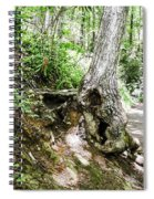 Twisted Tree Smoky Mountains Spiral Notebook