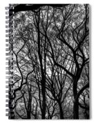 Twisted Trees Spiral Notebook