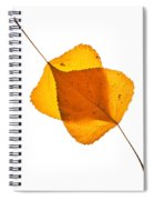 Two Backlit Cottonwood Leaves In Autumn On White Spiral Notebook