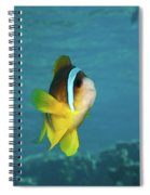 Two-banded Clownfish Spiral Notebook