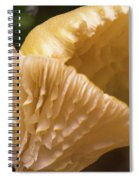 Two Cantharellus Spiral Notebook