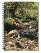 Two Cheetahs Spiral Notebook