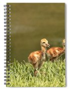 Two Chicks Spiral Notebook