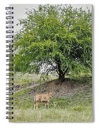 Two Cows And A Tree Spiral Notebook